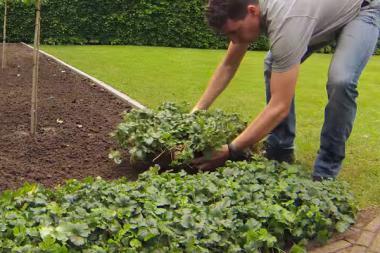 Plantematte