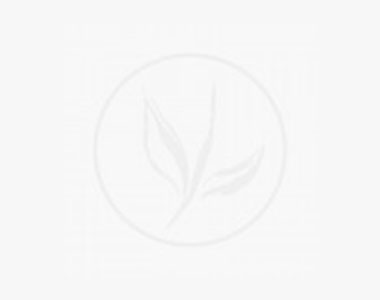 Tuja 'Brabant' Potte 80-100 cm Ekstra kvalitet