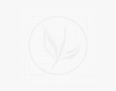 Japansk kristtorn 'Dark Green' ® I potte 30-40 cm