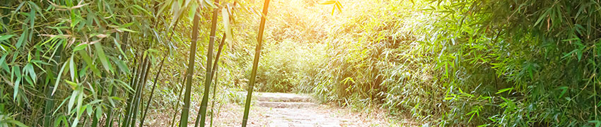 Bambus som hekk