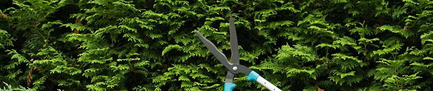Hekkplanter: fra planteskolen til hagen din