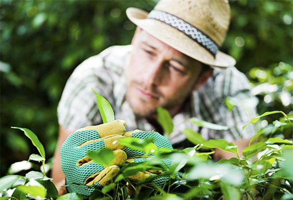 Informasjon om hekkplanter