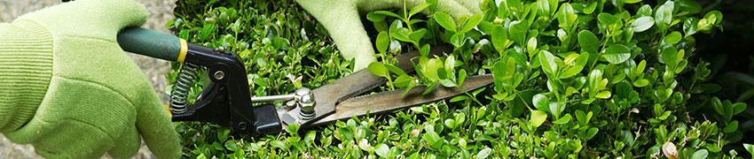 Planting og stell